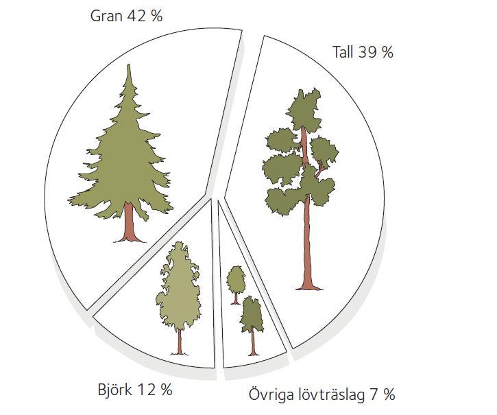Det svenska skogsbeståndet fördelat på träslag i procent. Bild: Svenskt trä